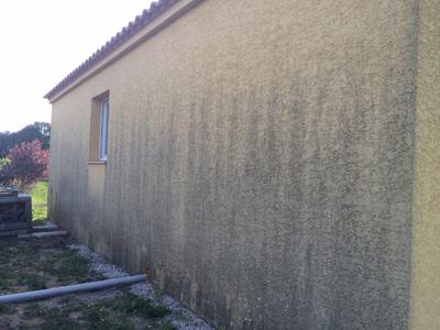 Champignon mur exterieur maison avie home - Champignon salle de bain ...